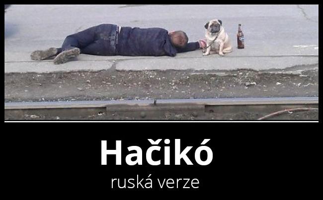 hatchiko_rv